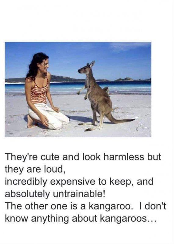 kangooroo.jpg